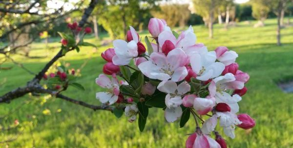 L'arboretum de la la petite Loiterie (reporté en raison du Covid)