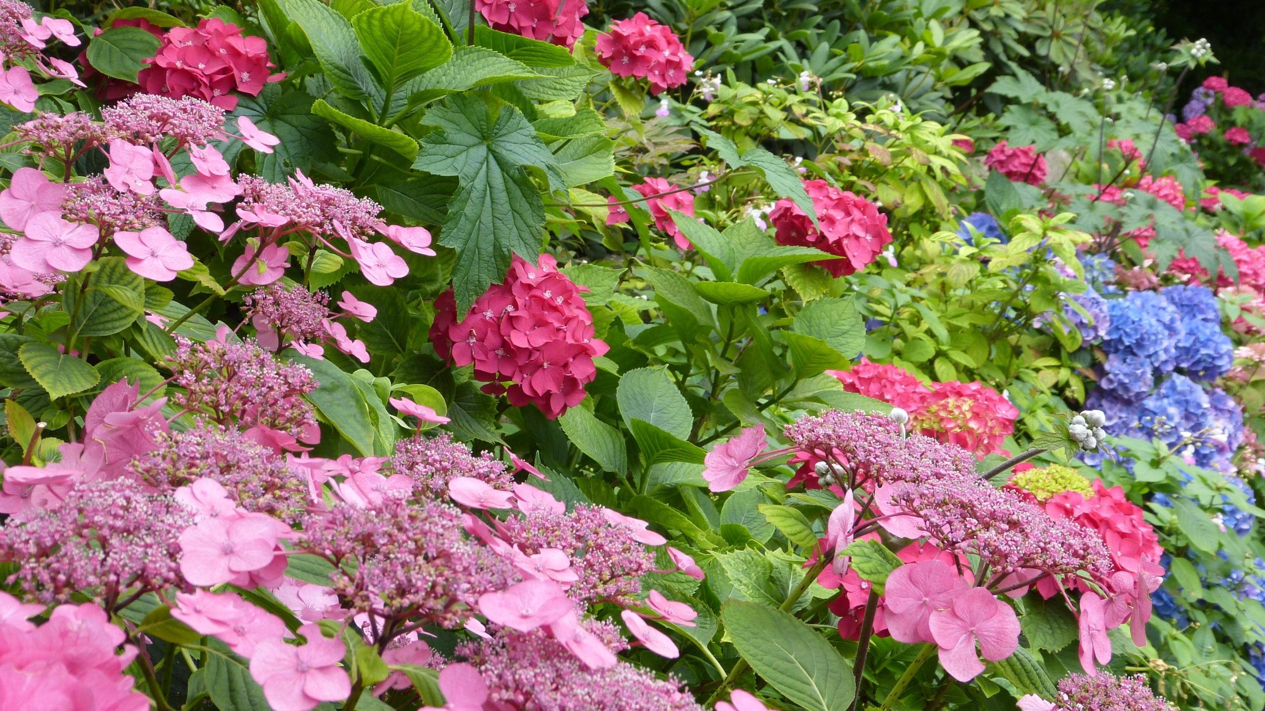 Les jardins d'Altona